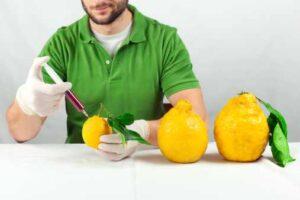 ogm-limone1