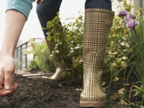 """Agricoltura, il primo eco-diserbante è italiano: """"Tutto è nato per salvare le api"""""""