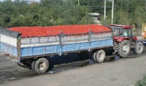 Pomodori cinesi2