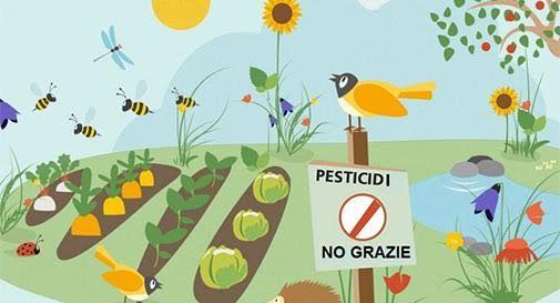 Pesticidi no