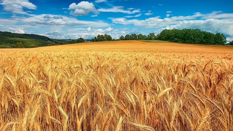 Coldiretti: crollo dell'import di grano canadese, boom della pasta made in Puglia!