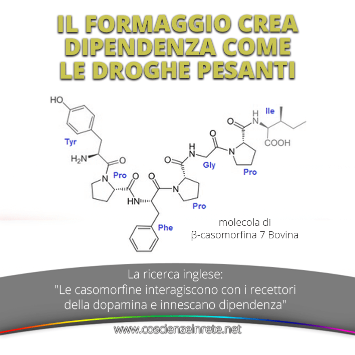 CIR Casomorfina 1 19