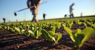 Agricoltura Bio 2 19
