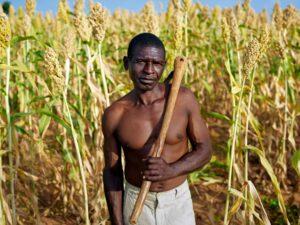 seedsafrica