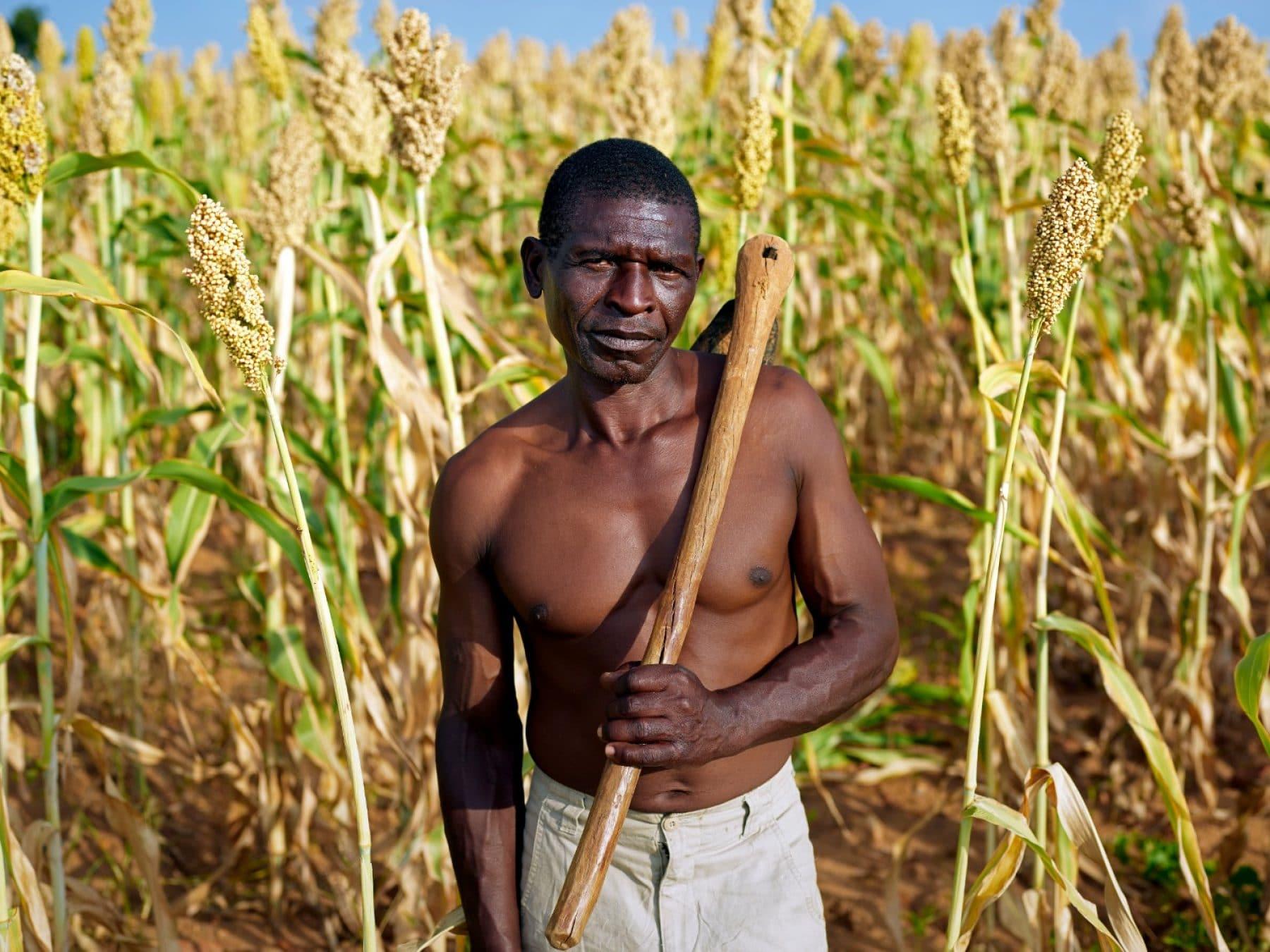 Zimbabwe: un numero crescente di agricoltori sta tornando all'uso di semi indigeni