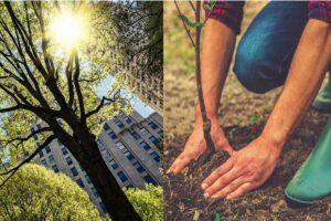 piantare alberi citta