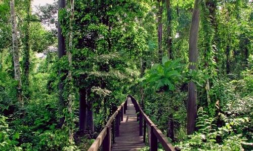 La foresta amazzonica è diventata un soggetto giuridico con gli stessi diritti di un essere umano