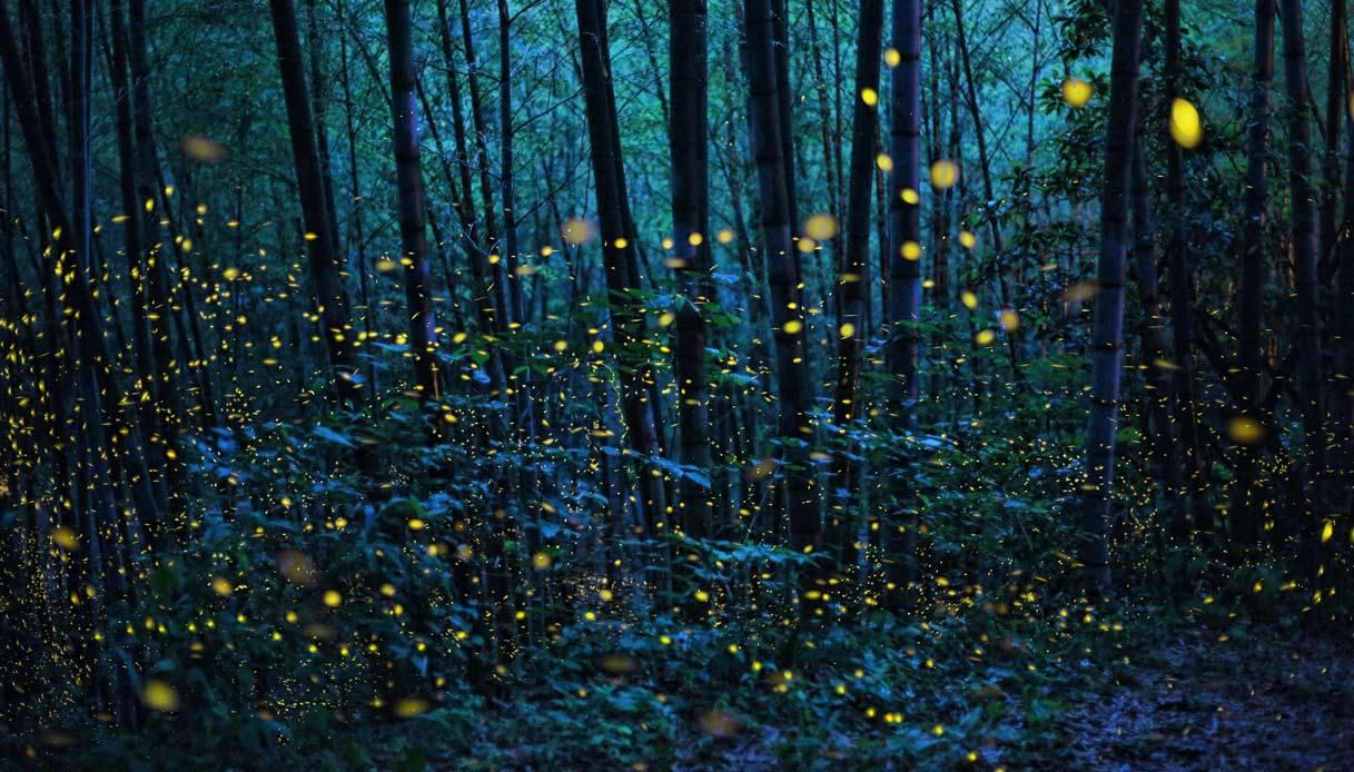 La scomparsa delle lucciole: tra le ragioni pesticidi, inquinamento e cementificazione