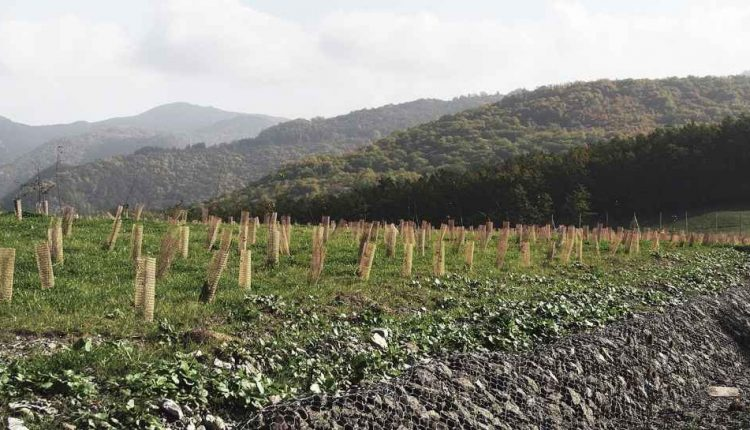 Fitorisanamento: le piante per risolvere il problema inquinamento