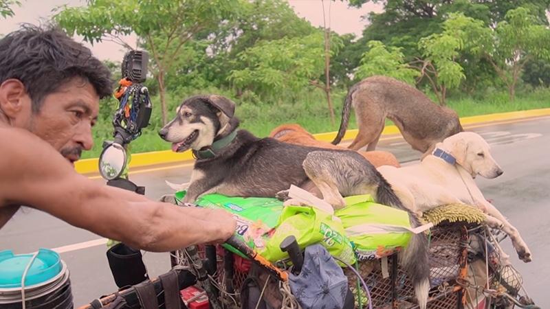L'umile uomo che percorre il perimetro del Messico salvando centinaia di cani malati e feriti