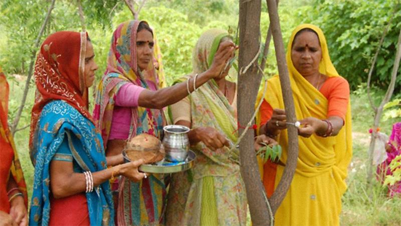 Villaggio in India pianta 111 alberi ogni volta che nasce una bambina (VIDEO)