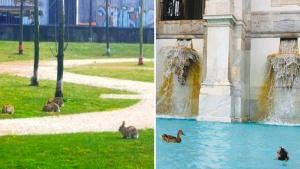 animali tornano nelle città