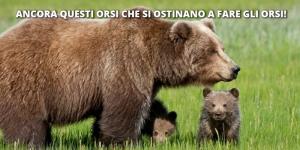 Orsi Trentino abbattimenti